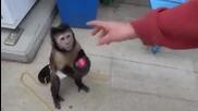 Умна маймунка