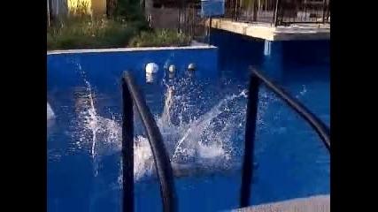 nashiq basein - bar roql