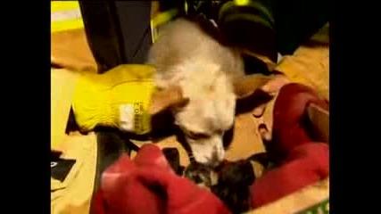 Смело куче спасява малки котенца от пожар