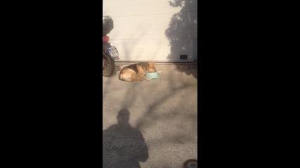 Много мързеливо куче