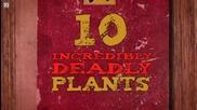 10 Смъртоносни растения..