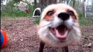 Сладка лисичка се радва на си топка за 5-годишният и рожден ден
