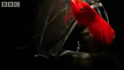 10 - те най - зловещи риби