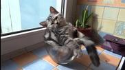 Котка в пълен релакс