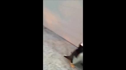 Зоологическата градина в Одензе и нейните Сладки пингвини