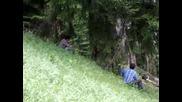 Широка Лъка - Поваляне На Дърво 3