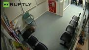 Любопитна коала влиза в австралийска болница