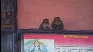 """Маймуните са навсякъде (""""Без багаж"""" еп.51 трейлър)"""