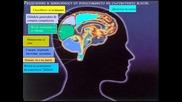 Как работят женският и мъжкият мозък