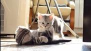 Сладки Котета се закачат