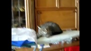 Котка пищи и се кара на стопанката!
