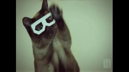 Котенце * 3d * Очиала ! Какво ли вижда ?