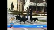 кучета нападат 27г жена