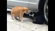 Кавга между котки (смях)
