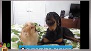 Много смешни животни, които се опитват да говорят