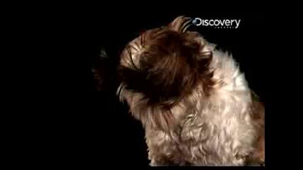 Time Warp : Кучешко кихане