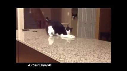 Котка чупи стойки!
