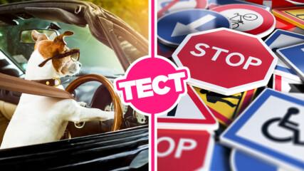 ТЕСТ: Можеш ли да се справиш с тези въпроси за шофьорски изпит?