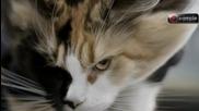 Шведски котки скачат с парашут ( skydive )