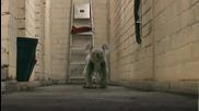 Сладка! Коала бяга по коридора ...