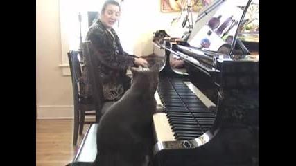 Nora котката която свири на пиано