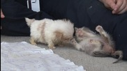 Това мъничко кученце е толкова сладко, но почакай да видиш неговия най-добър приятел!