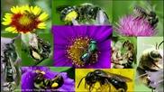 Защо изчезват пчелите
