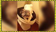 Какво правят котките, когато не гледате!