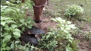 Кон прекъсва заварката на костенурка