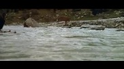 Мечката - филм на Жан - Жак Ано