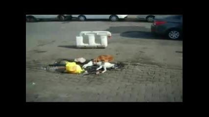 Куче тъжи за мъртвия си приятел!