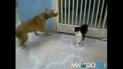 Котката На Дарк Вейдар