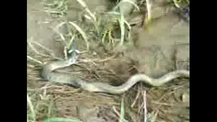 страшна змия