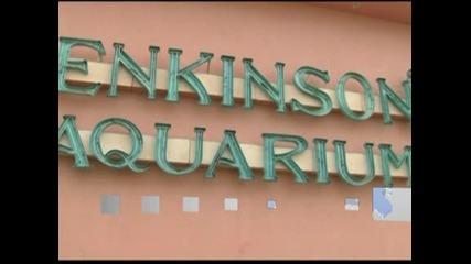 """Персоналът на аквариум в Ню Джърси се бори смело с бурята """"Санди"""", за да защити питомците си"""