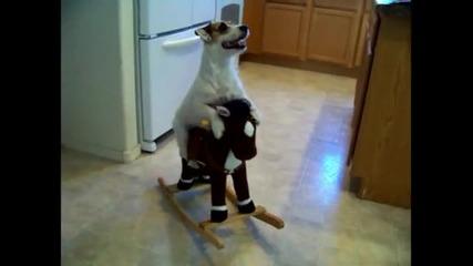 Това Куче Е Удивително !