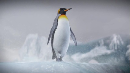 Галапагоският пингвин ..