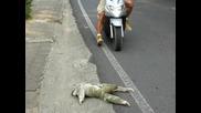 Ленивец пресича улицата