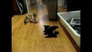 Войната На Зверовете - Коте Срещу Куче-Робот - Смях