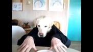 Смях.. Човек с главата на куче..