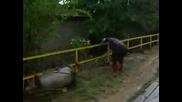 наводнение в ценово2