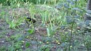 Малки котенца 3