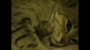 Майка котка с нейната първа рожба