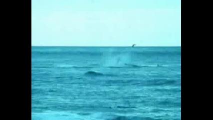Все Още Ли Искате Да Спасите Китовете?