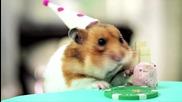 Рожденният ден на един таралеж