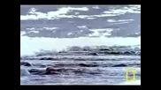 Северния Ледовит Океан
