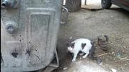 Котка с Украска Сърце