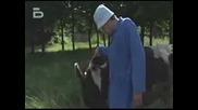 Bobi Turboto - Zabiva Krava