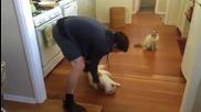 Котка обича да я плъзгат по пода!