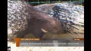 Новa атракция в зоопарка на Стара Загора