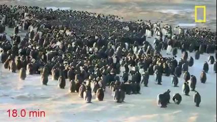 Факторите на пингвините